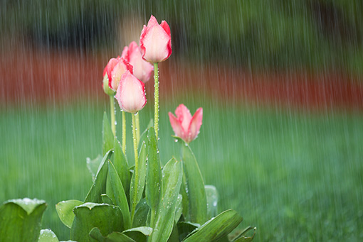 Image result for gardens in rains